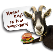 Wanna goat in your backyard?